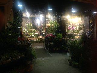 Foto del 26 de noviembre de 2016 17:28, Féerie Florale, 92 Avenue de Saint-Mandé, 75012 Paris, Frankreich