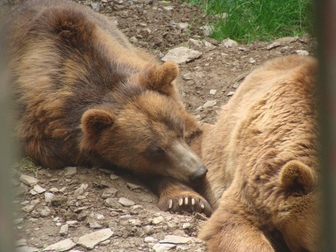 Foto vom 13. September 2016 12:31, Animal Park Bouillon, Chemin de Chanteraine, 6830 Bouillon, Belgien