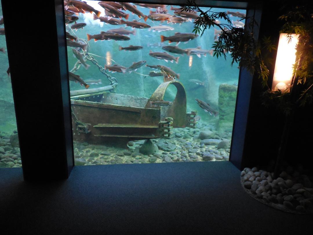 Foto del 5 de febrero de 2016 18:57, Grand Aquarium de Touraine, Lieu dit les Hauts Boeufs, 37400 Lussault-sur-Loire, France