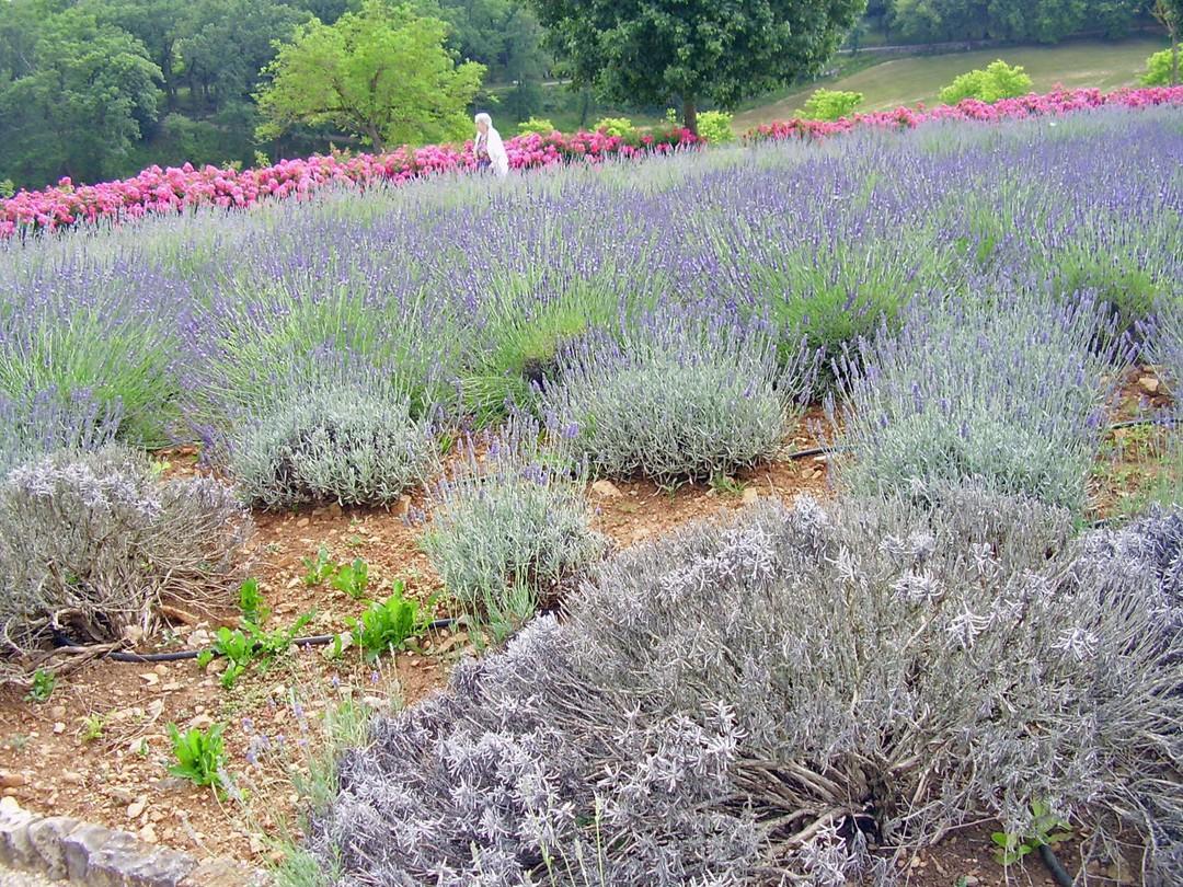 Photo du 1 juillet 2018 16:45, Jardins du Grand Couvent de Gramat, 33 Avenue Louis Mazet, 46500 Gramat, France