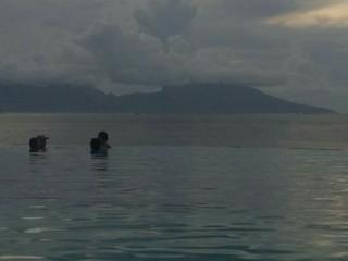 Photo du 7 mars 2018 06:23, Manava Suite Resort Tahiti, BP 2851 Punavai, Puna'auia 98703, Polynésie française