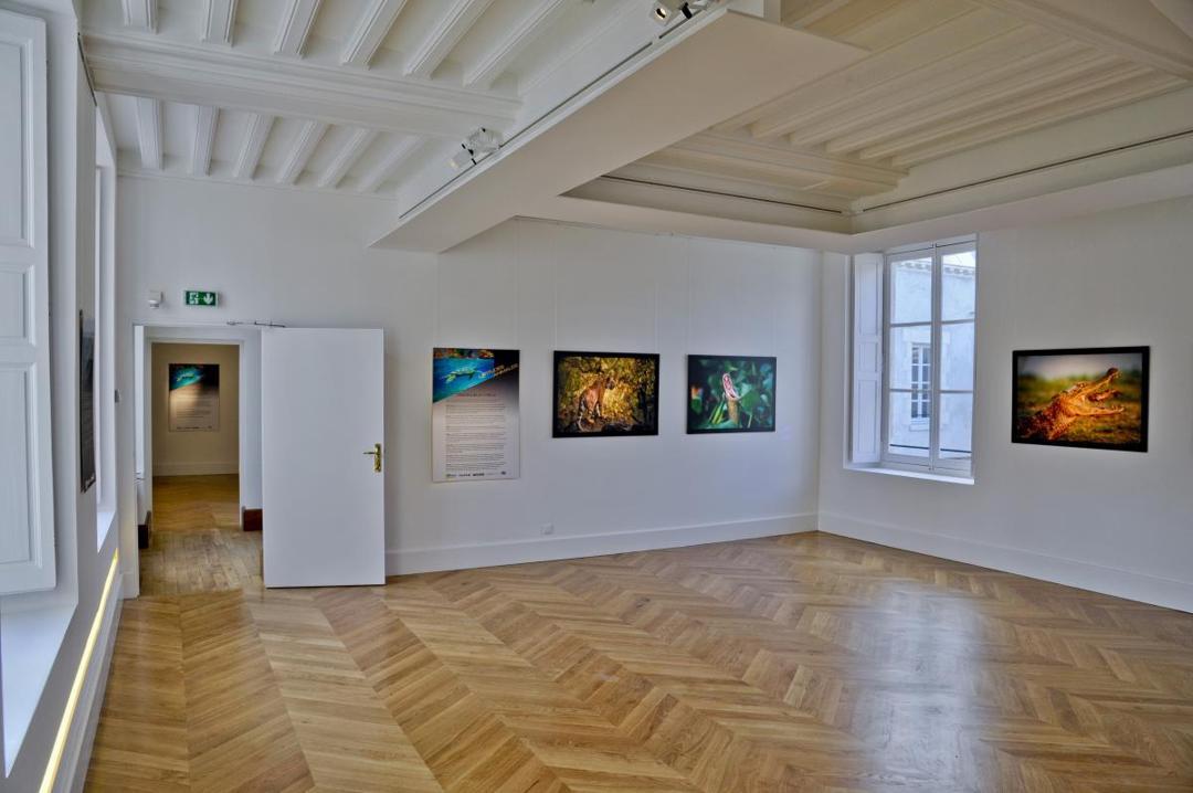 Foto vom 5. Februar 2016 18:57, Galerie du Lion, 6 Rue Croix de Malte, 45000 Orléans, France